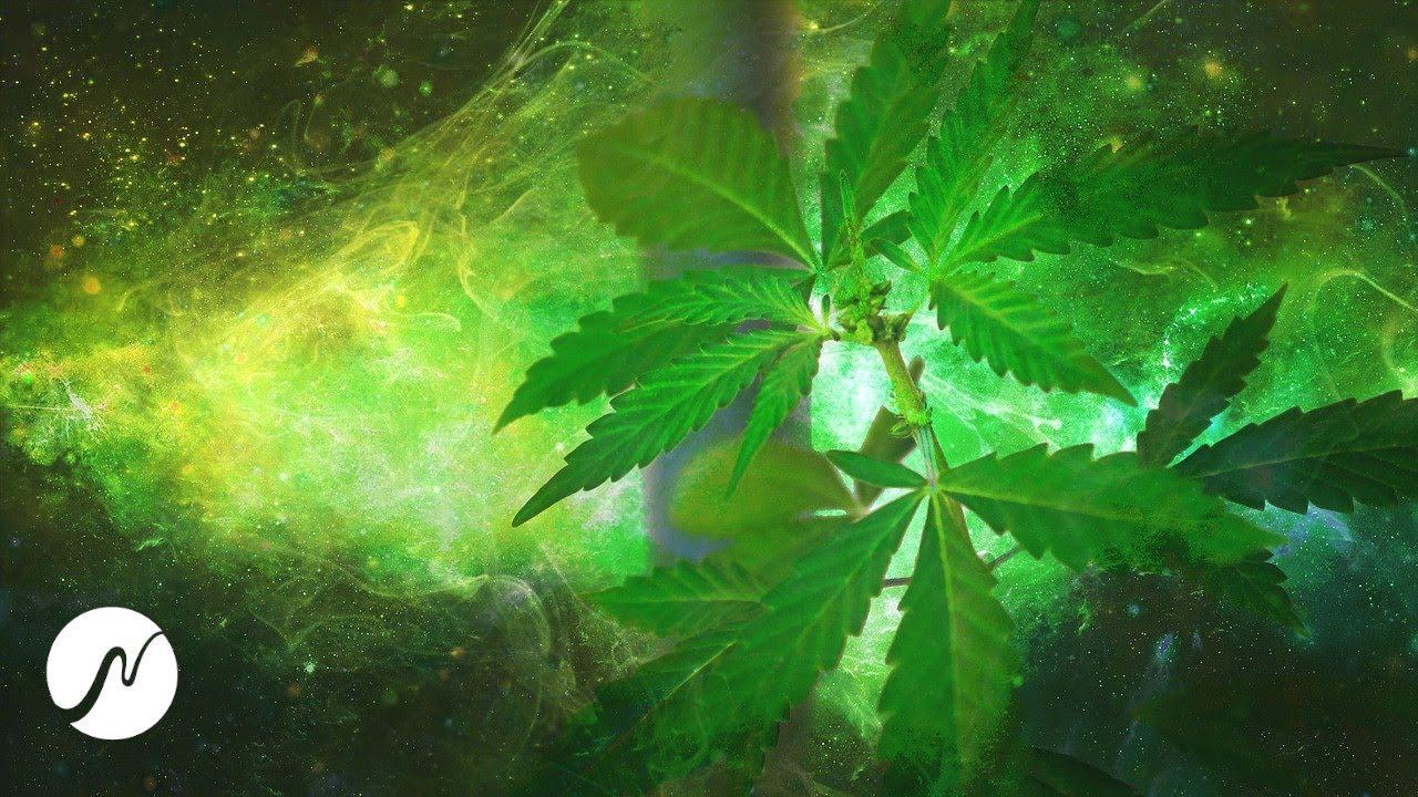 Frecuencia de cannabis (molécula de THC) – latidos binaurales (¡experimental!)