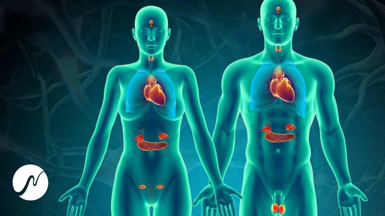 Frecuencias de curación (1335 Hz): estabiliza el sistema hormonal y regenera las glándulas suprarrenales