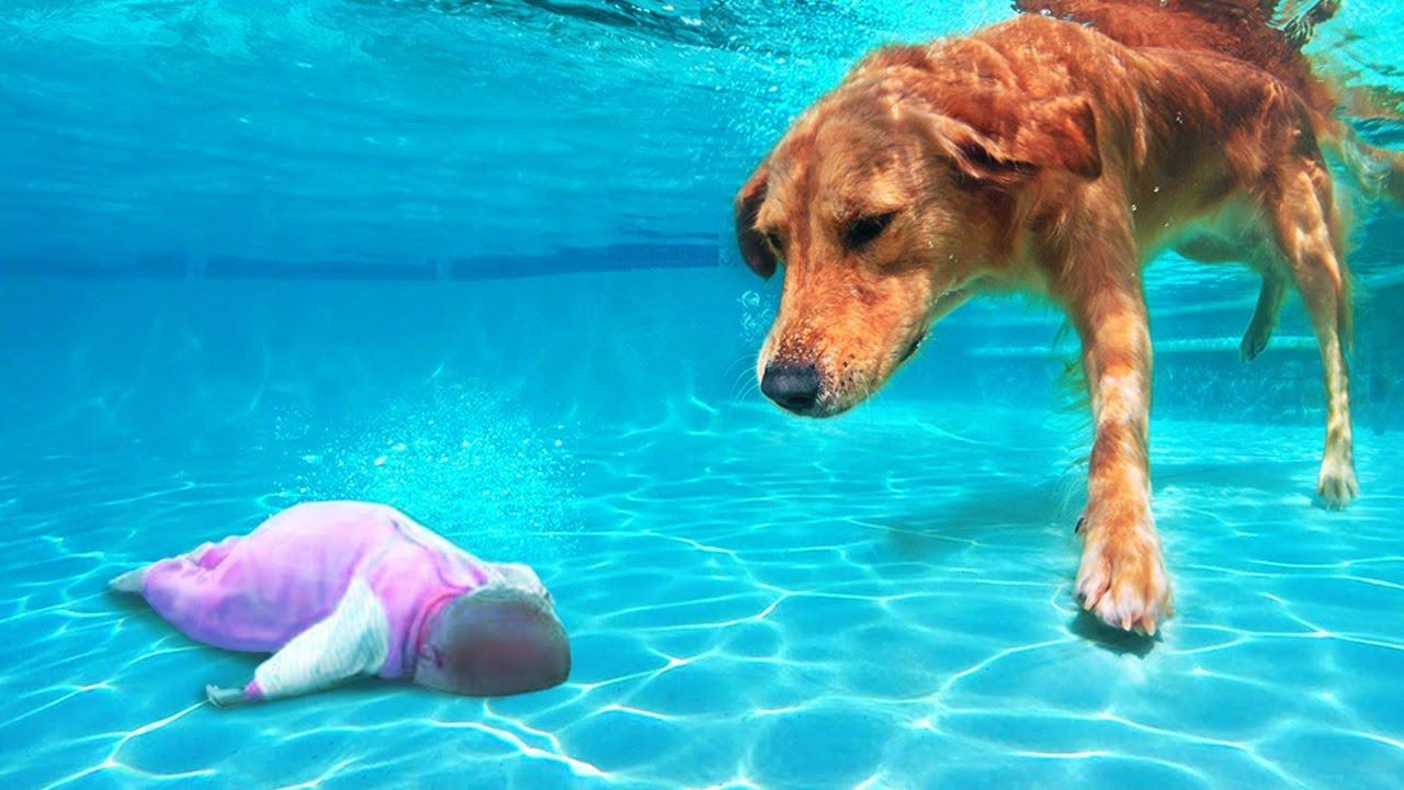 Un Perro Héroe Salva a un Niño en el Agua. 10 Veces en las que los Animales Salvaron a los Humanos