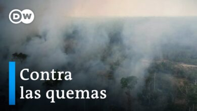 Brasil espera reactivación de fondos para la Amazonía