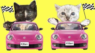 Competencias para mis nuevos gatitos con los gatos Luna y Estrella / Cute Kittens