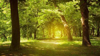 Música relajante, bosque encantador, sonidos de la naturaleza, música de piano, alivio del estrés