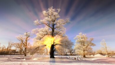 11 HORAS Música relajante, Imágenes de invierno, Música emocional, Música para dormir, Spa