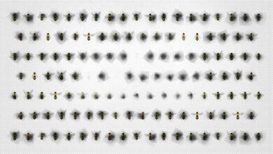 El caso de las abejas desaparecidas – Emma Bryce